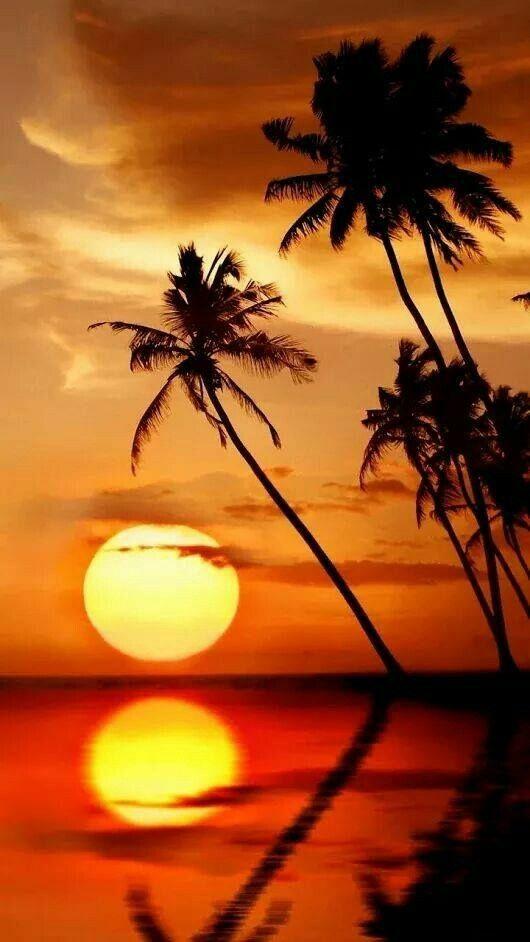 Pohon Kelapa Pemandangan Fotografi Alam Fotografi Pantai