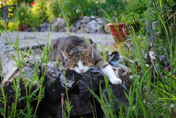 CarpeDiem-living - Gartentagebuch