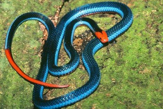 20 plus beau serpent du monde - Le Portail de l'Univers