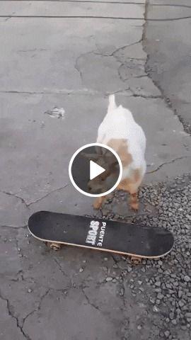 Uma cabra aprendendo a andar de skate