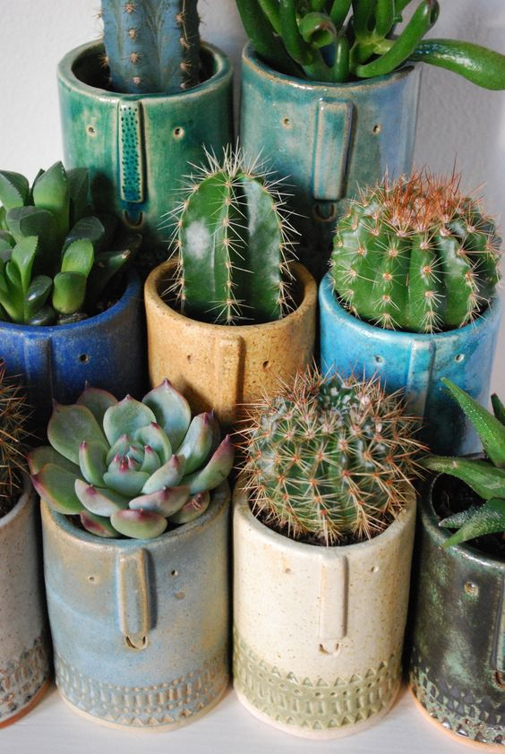 Potted cactus ideas the image kid has it for Cactus in pots ideas