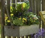 Balkonkasten mit Mangold, Thymian und Lavendel
