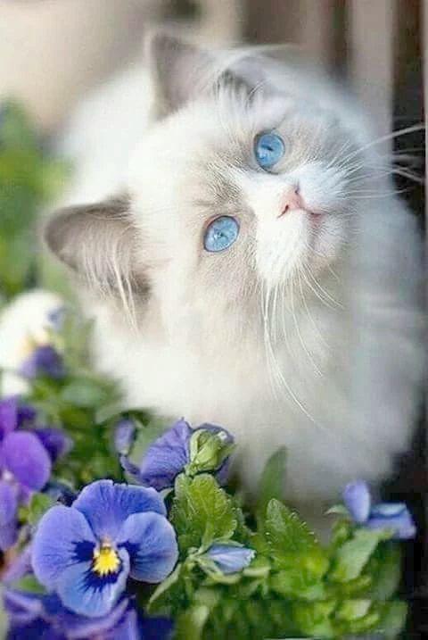 Kittens Jackson Mi Kittens Black And White Beautiful Cats Cute Animals Cute Cats