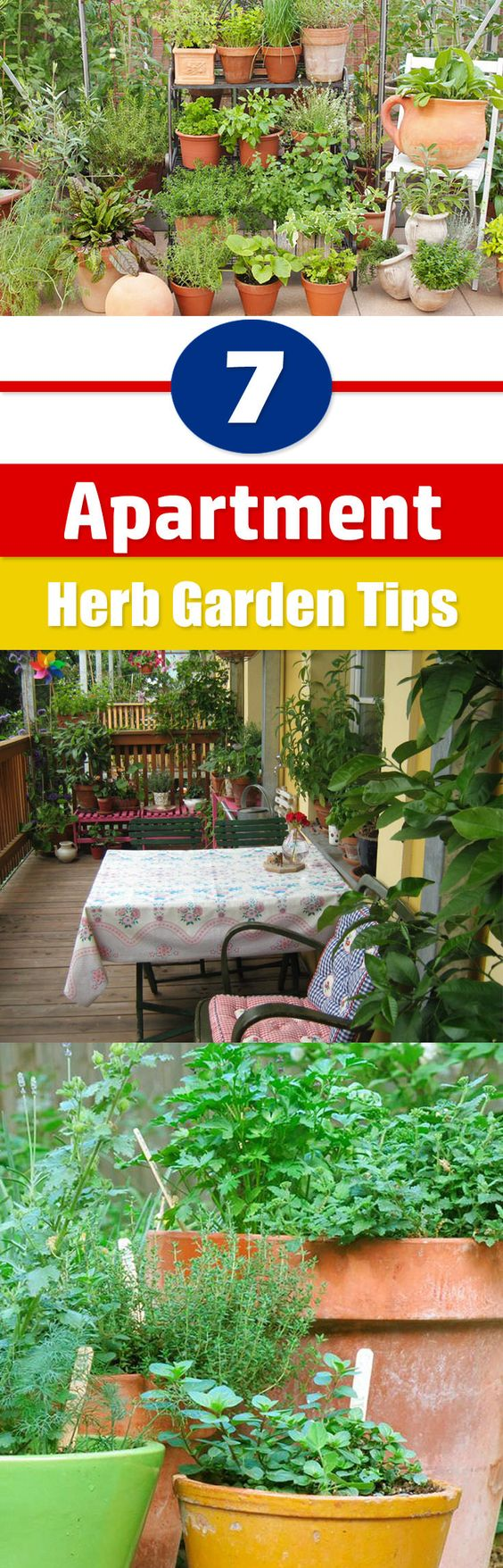space for a regular garden with these 7 apartment herb garden tips