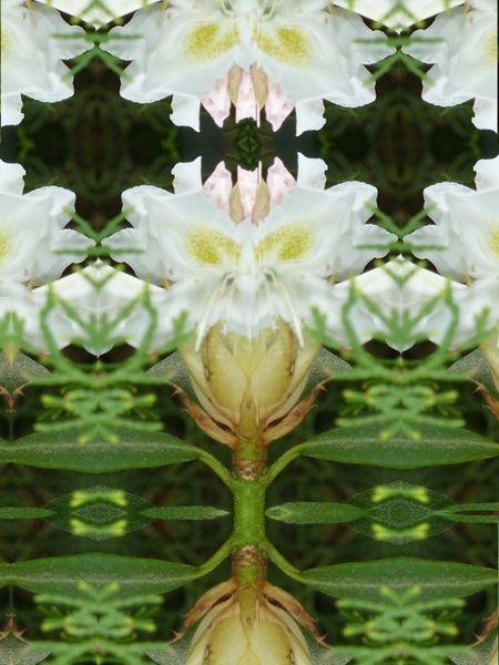 'Hommage an den Rhododendron III' von Martin Blättner bei artflakes.com als Poster oder Kunstdruck $15.68