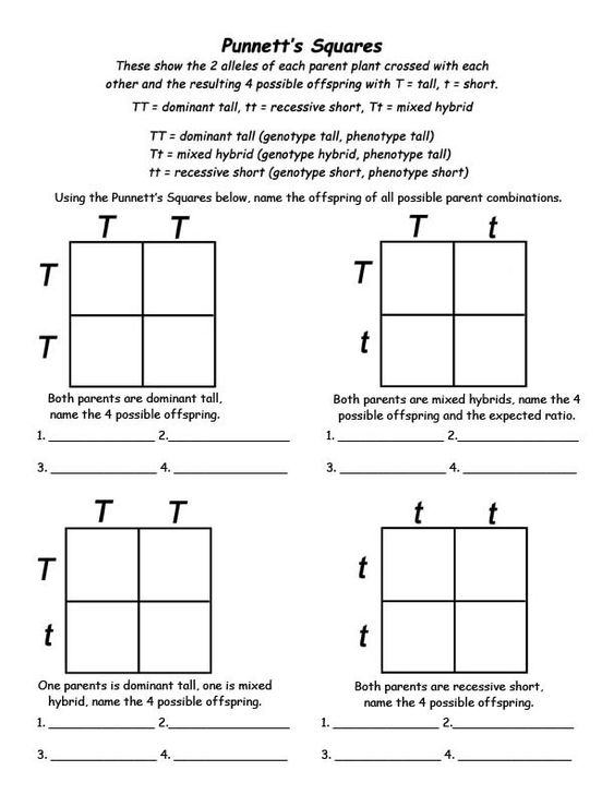 easy punnett square worksheet free worksheets library download and print worksheets free on. Black Bedroom Furniture Sets. Home Design Ideas