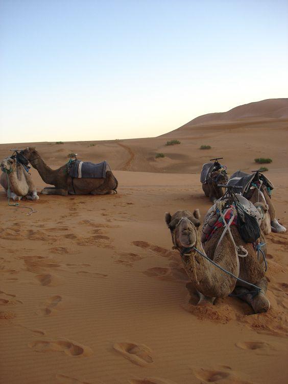 Marruecos - Sahara
