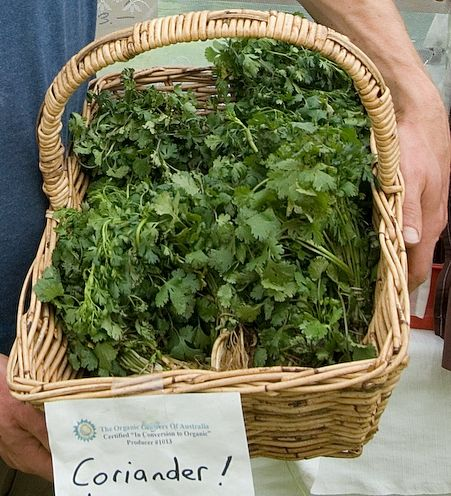 Coriander at Wodonga Farmers' Market