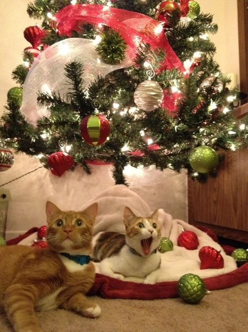 CATS, ITS SANTA!!!!!!: