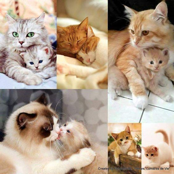 """Mother's love! Photo by """"I love kittens and cats"""":"""