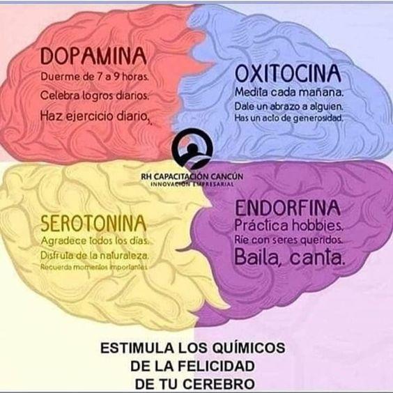 El cerebro como cualquier otro órgano necesita de cuidados y entrenamiento aquí te dejo los principales neurotransmisores del bienestar y…
