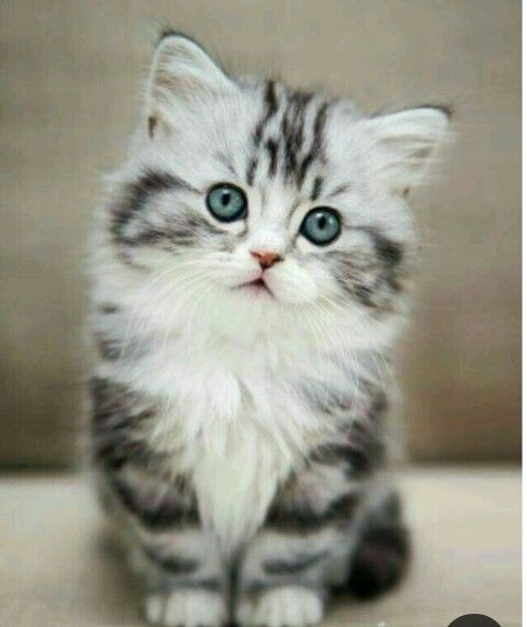 Pin On Cat Lovers