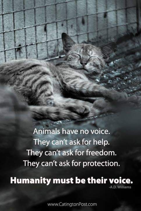 Pin On Speak Out For Animals