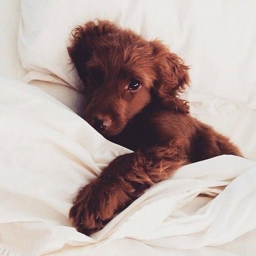 Sorry The Beds Full How Adorably Snug Does This Little Pup