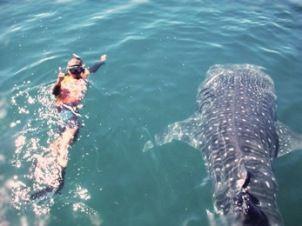 Espiritu & Baja Tours whale shark La Paz Baja Mexico camping on Espiritu Santo