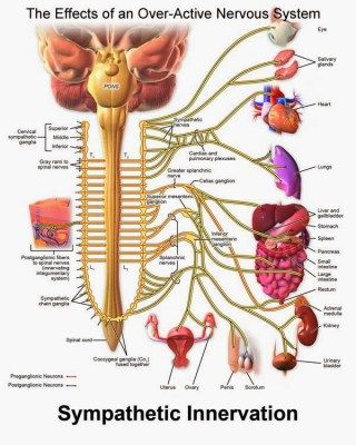 Fibromyalgia Nerve Pain affects a more areas than we would expect.