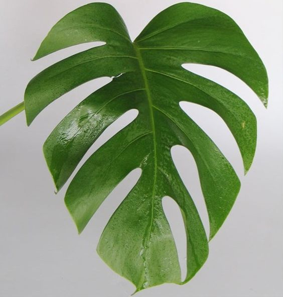Leaf Template, Tropical And Facebook On Pinterest