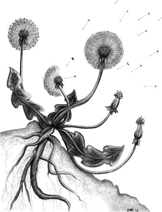 how to eat dandelion root