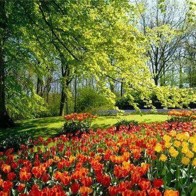 Jardins!!!!