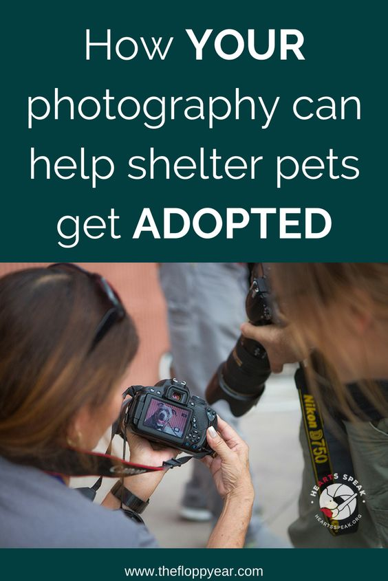 Get Animals Adopted With Your Own Photography Here S How Pet Photography Tips Dog Photography Animal Shelter