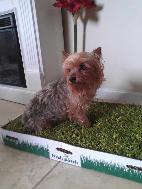 Fresh Patch Indoor Dog Potty Product Review And Tips
