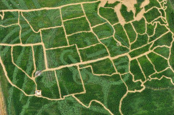 Ammersee, Germania    Una foto che mostra un campo coltivato dove strisce di girasoli formano la mappa degli Stati Uniti Ammersee, Germania