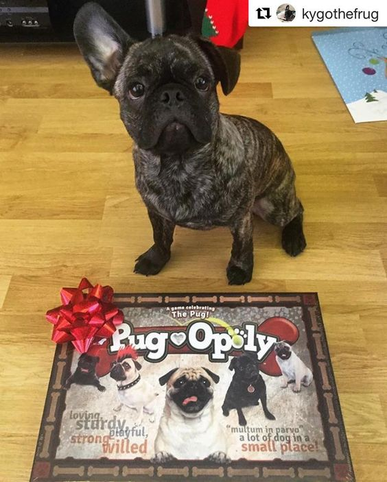 Here S A Mini Tbt To Christmas Where Kygothefrug Got A Copy Of Pug Opoly How Perfect Is This Repost Kygothefrug With Repost Pugs Dogs Happy Customers