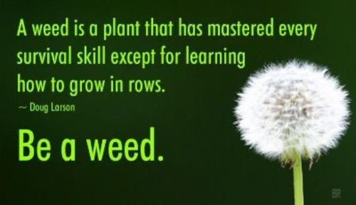 Be a weed.