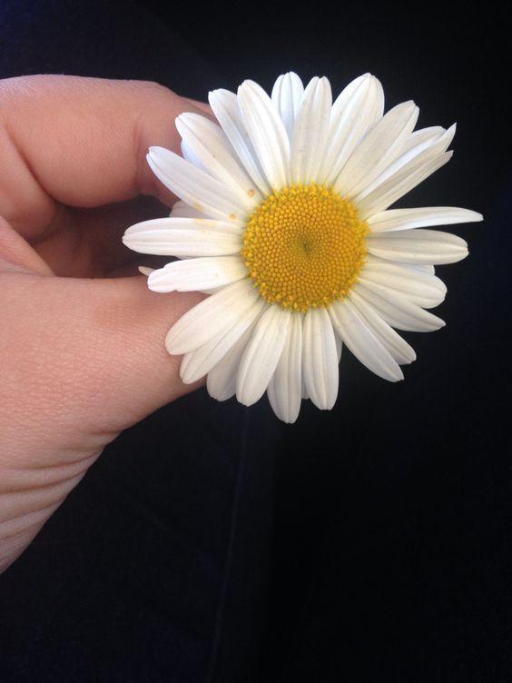 Que até pra ser flor precisa de sorte, umas nasceram pra enfeitar a vida outras a morte.....