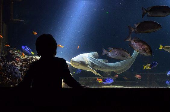 8/52 52 Project / mummy karma blog / practising simplicity / living arrows / photography / Nausicaa Boulogne Aquarium / dramatic light / zebra shark