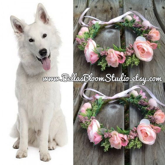 dog collars wedding pink collars girls wedding dogs dogs dog collars
