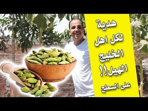 زراعة الحبهان الهيل فى المنزل Youtube Chia Seed Recipes Vegetables Cooking Recipes