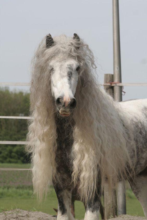 Wild Horses kostenlos spielen | Online-Slot.de