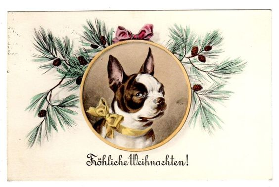 POSTCARD DOGS FRENCH BULLDOG CHRISTMAS PORTRAIT M. MUNK 749