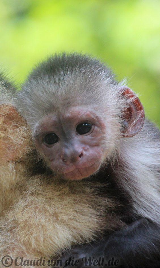 Meet the Monkeys - on Roatan Island, Honduras