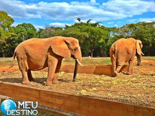 O Zoológico de Belo Horizonte possui mais de 250 diferentes espécies de animais