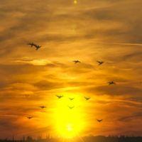 flock of birds 3ds Max