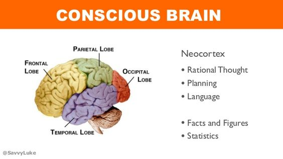 @SavvyLuke CONSCIOUS BRAIN • Rational Thought • Planning • Language • Facts and Figures • Statistics Neocortex