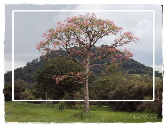 Beto Piccolo: Natureza em Ribeirão Bonito!