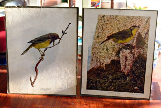 Antique Schoolhouse Education Cards  Pair of Warblers @etsy