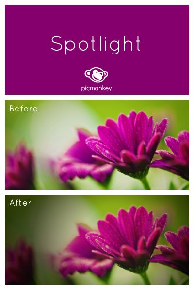 PicMonkey's Spotlight effect gives focus to your image with its circular vignette that you can place anywhere.