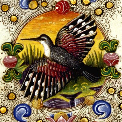 Taddeo Crivelli, woodcock from the Bible of Borso d'Este, 1455: