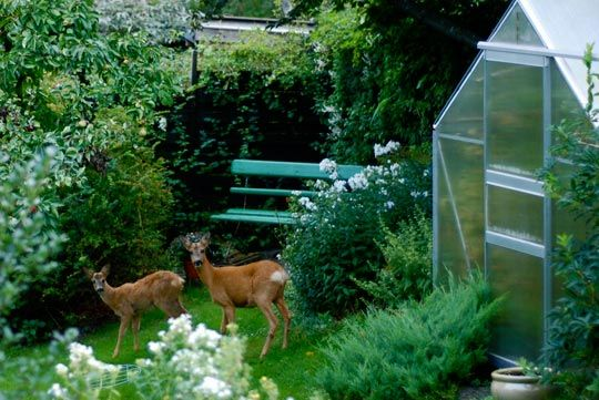 40 plants that naturally deter deer.  The deer around here eat all of my plants & flowers. Good to know.