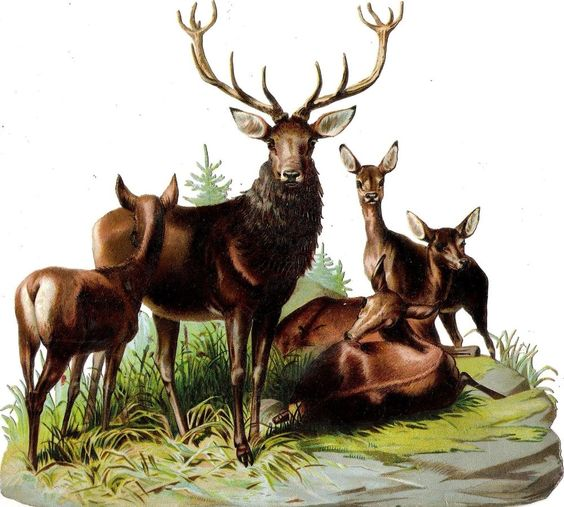 Oblaten Glanzbild scrap die cut chromo Reh XL 21cm Hirsch deer Wild Wald wood: