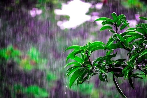 Rain Wallpaper 4k For Pc Ideas Trend In 2020 Rain Photo Rain Wallpapers Sound Of Rain