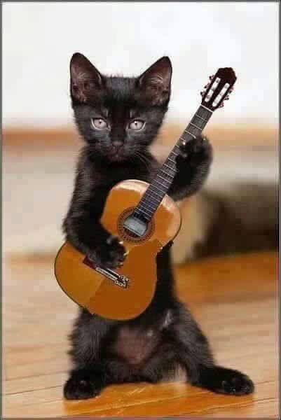 Cat guitare tattoo
