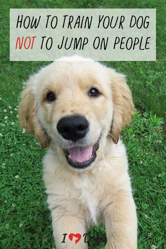 How To Train Your Dog Not To Jump On People Dog Training The
