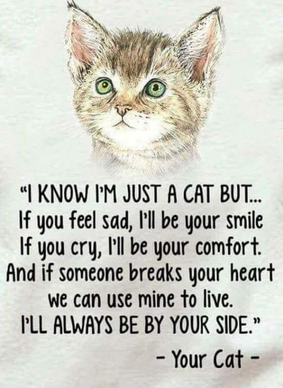 Pin By Trublue Kittie On All God S Creatures Cat Quotes Cat Love Crazy Cats