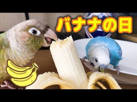 インコ喜ぶバナナの日 Youtube バナナ インコ