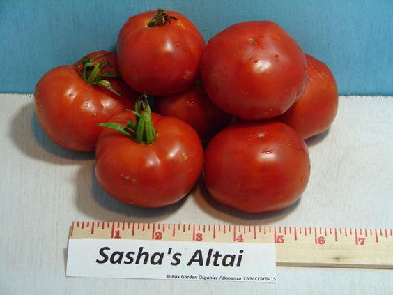 Sashas Altai Tomato Seeds Heirloom Organic Non-GMO